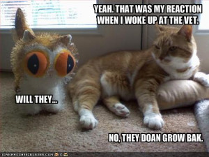 funny-pictures-cat-shares-his-vet-experiences - funny-pictures-cat ...