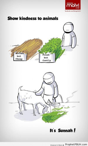 Show Kindness to Animals (Islamic Cartoon) - Drawings ← Prev Next ...
