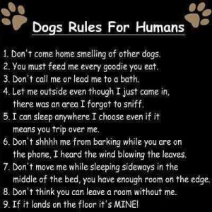 quotes and sayings | quotes about angel dog rules for humans » Quotes ...
