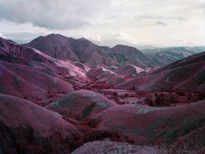Richard Mosse's infrared photographs of the Congo quotes W. G. Sebald ...