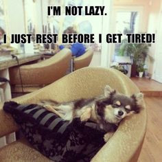 Funny Nap Quotes | Funny Sleep Quotes