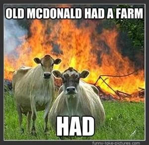 Funny Old McDonald Had a Farm Cows Picture Image Meme