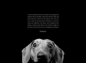 quote:Voltaire on Animal Rights