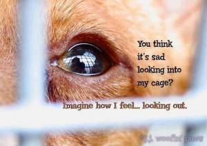 Sad Animal Quotes Filed under animal quotes