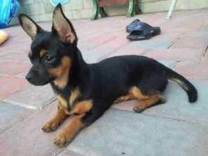 Dog images, dog animations, dog quotes, dog training tips, funny dogs ...