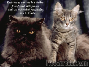 Screenshot of Cats and Quotes Scenic Reflections Screensaver