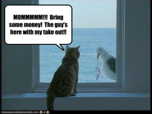Leave a Comment : Cats , Delivery , Food more...