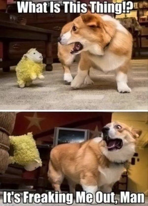 1422145301-1-25-Best-Funny-animal-Quotes-and-Funny-Memes.jpg