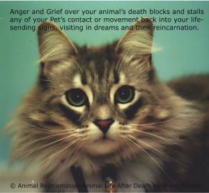 Animal Souls Life After Death Pet TV l Pet Spirits l Can Pets Come ...