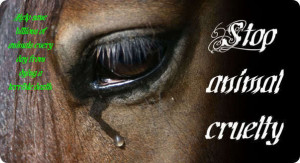 Against Horse Slaughter! Stop The Pain
