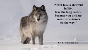 Inspirational Wolf Quotes Wolf family