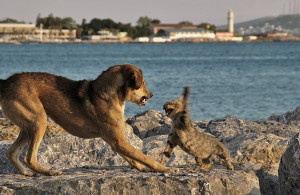 dog-cat-fight