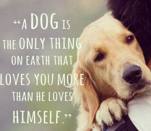 Dogs are true, don't get a dog if you can't absolutely commit to ...