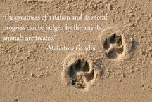 famous quotes animal rights quotes tumblrmihjy i cfrwdzor quote ...