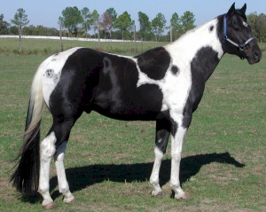 Black And White Horse Quotes Quotesgram