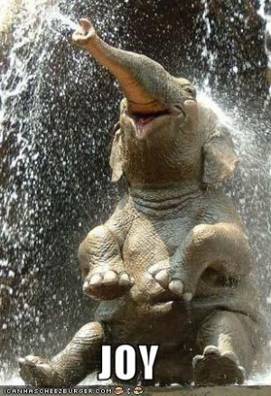 ... or feeling stuck. Elephants in dreams generally represent slowness