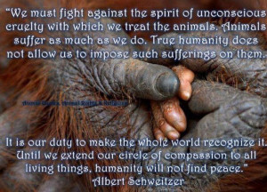 ... Albert Schweitzer quote.: Quotes Religious Inspiration, Schweitzer