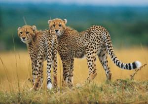 most endangered animals