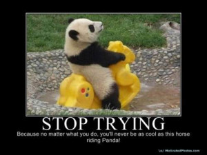 Funny Panda Quotes Panda's are strange and crazy.