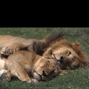 Let's take a nap!