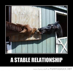 horses animals kissing stable relationship funny pics pictures pic ...