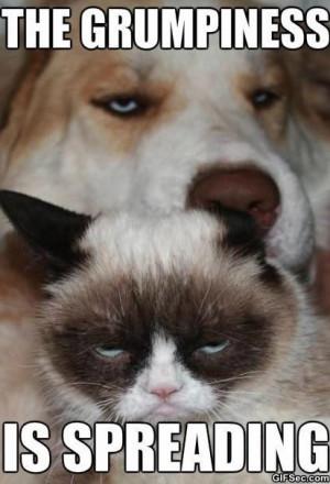 Grumpy-cat-and-grumpy-dog_1.jpg
