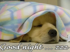 Good night. See you tomorrow!