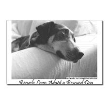 Cute Animal rescue quote Postcards (Package of 8)