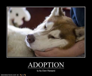 Important Points To Consider Before Adopting