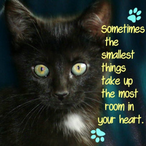 Poems And Quotes About Cats