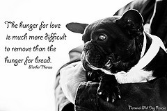 Displaying (19) Gallery Images For Animal Rescue Quotes And Sayings...