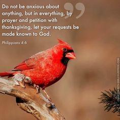 ... bible surprise biblesurprise com more bible quotes verses ver everyday