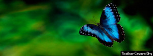 Blue Butterfly Facebook Cover