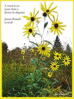 Wildflower quote by Joan Minchak, Richfield