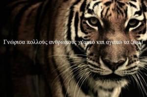 animals, greek quotes, quotes, tiger