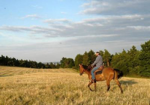 horsebackridingworldwi...Horse Quotes and Sayings: Show me your horse ...