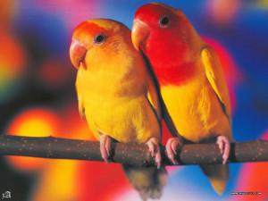 鸚鵡桌布 8 - zA-cal2k4_028_Pets_12.jpg