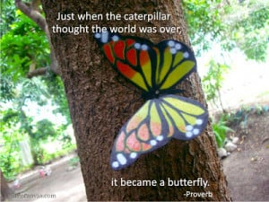 Here are the images with butterfly-related quotes and lessons: