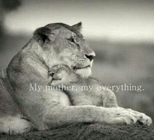 cute, lion love, love, mother love, pretty, quote, quotes