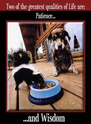 dog n skunk joke pic ROFL!! Funny Joke Pic!