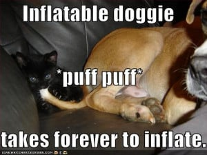 Funny Dogs With Captions Funny