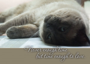 sympathy card with siamese cat Never enough time but time enough to ...