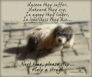 Please Help Saves Lives and Help the Homeless Pets. Be a hero ...
