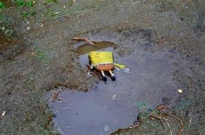 Bob Esponja es una esponja marina rectangular y de color amarillo que ...
