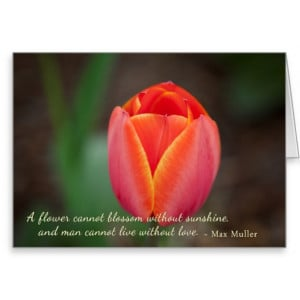 Tulip Quotes And Sayings