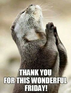 Happy Friday, Wonder Friday, Weekday Quotes, Otters Praying, Funny ...