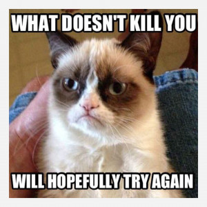 ASK A QUESTION Game: Funny grumpy cat quotes?