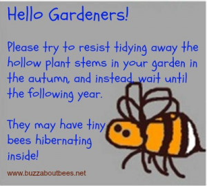 ... bees we need to make space for them dr david heaf the bee friendly