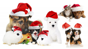cute christmas dog cat rabbit hd pictures cute kittens rabbits dogs ...