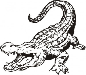 ... Drawing Outline: Alligators Drawings, Woods Burning, Drawings Outline
